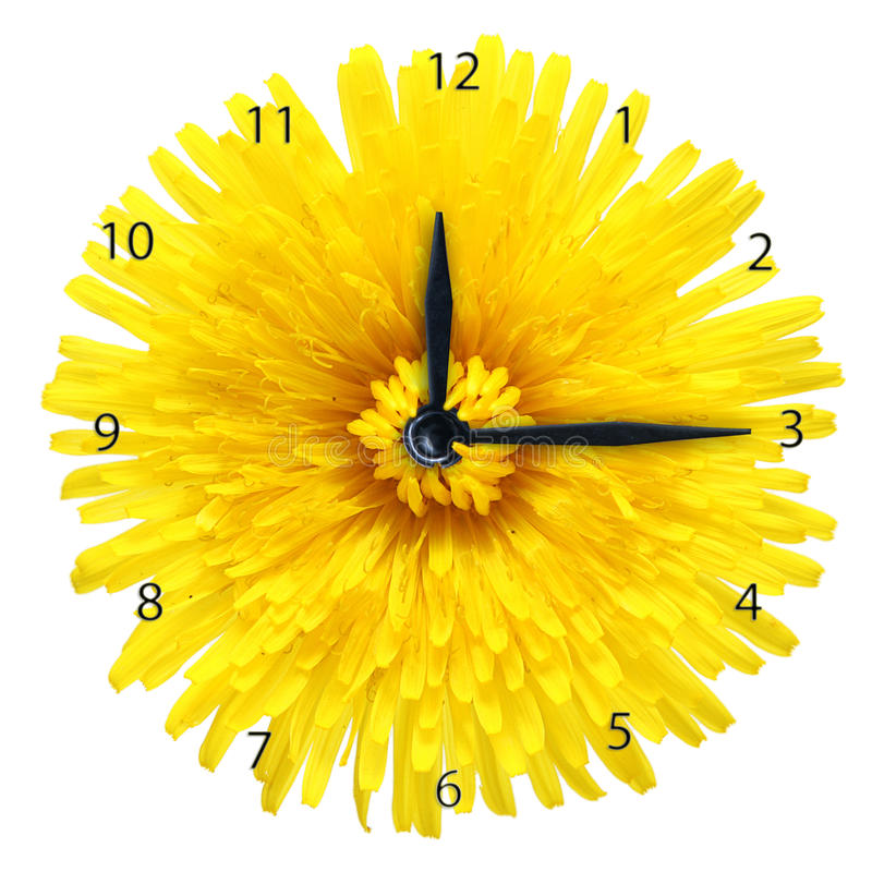Dandelion flower - clock. Dandelion flower - clock isolated on white background stock illustration