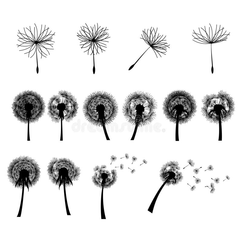 Dandelion Flower Head Blowing Wind Silhouette Illustration royalty free illustration