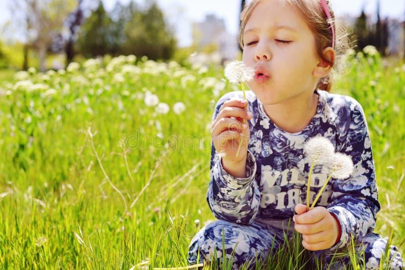 Dandelion fundindo da menina fotografia de stock