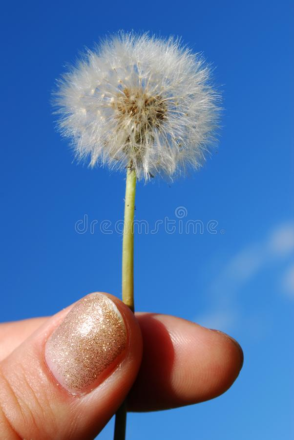 Download Dandelion in the hand stock photo. Image of flying, hand - 5550184