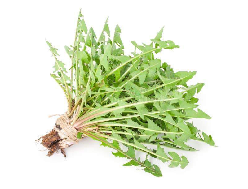 Dandelion herbs royalty free stock image