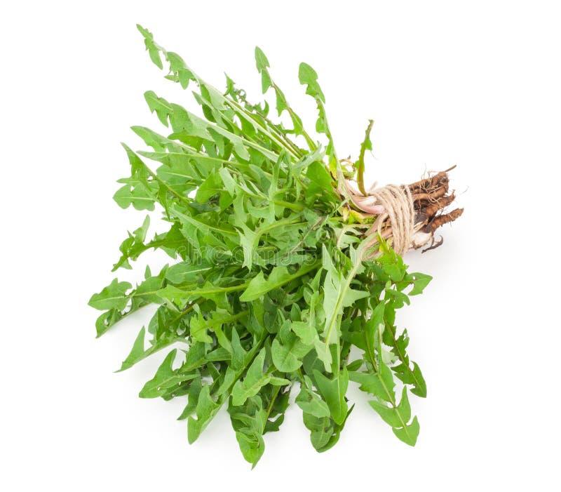 Dandelion herbs stock images