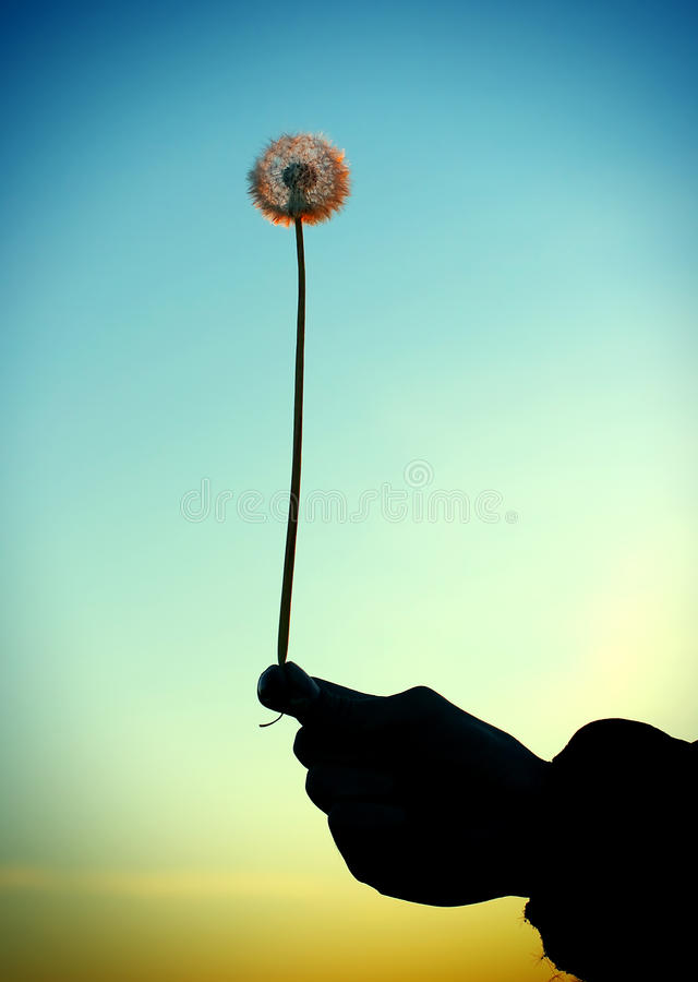 Free Dandelion In The Hand Royalty Free Stock Photo - 51179725
