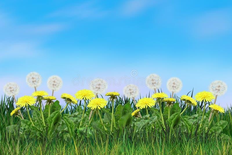 Dandelion flowers sunny day blowball floral landscape stock image