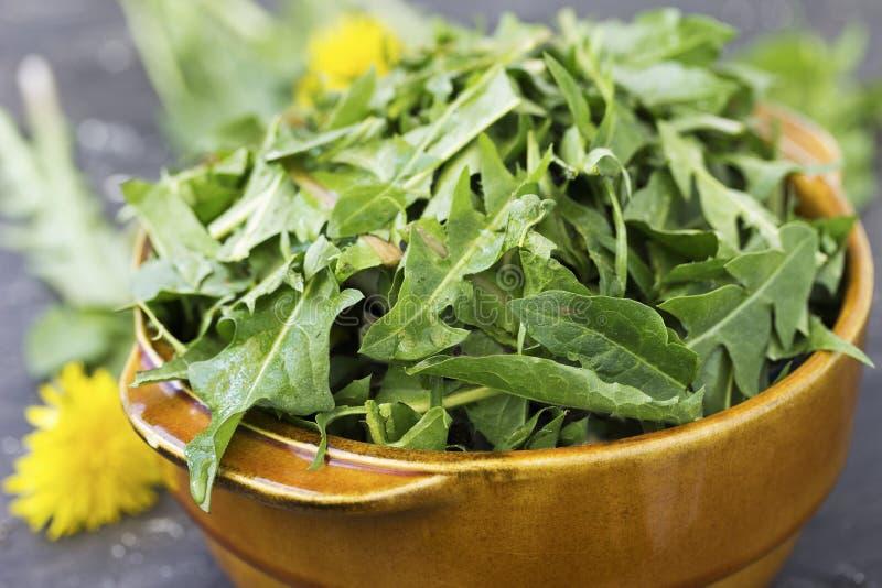Dandelion liście dla sałatki fotografia stock