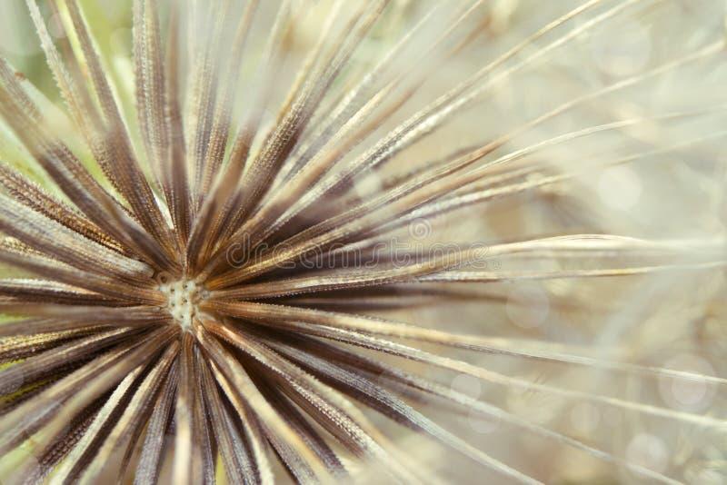 Dandelion macro. Macro photo of a dandelion seed royalty free stock photos