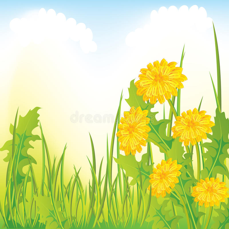 Dandelion Meadow Stock Image