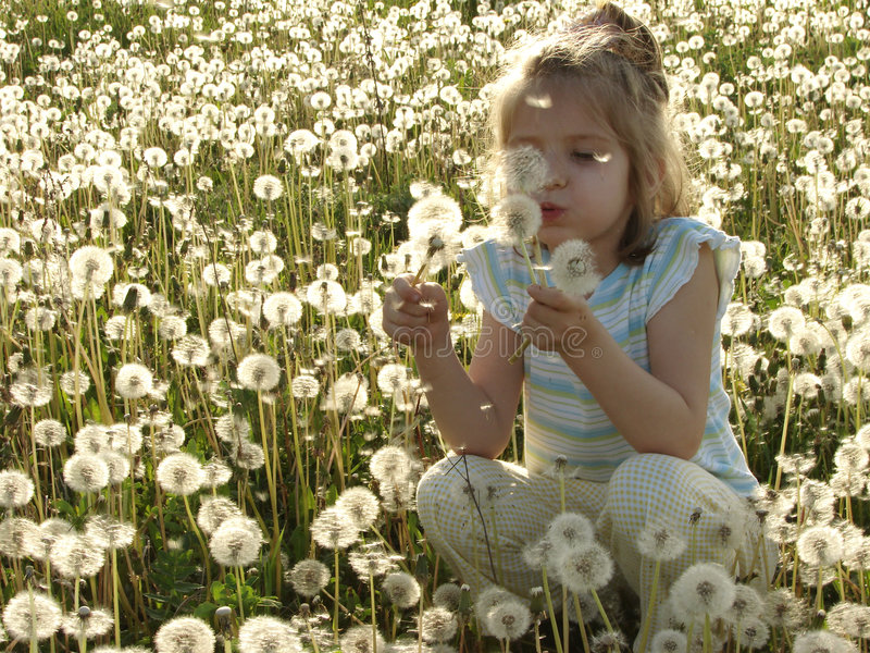 Dandelion meadow. Portrait of the little pretty girl at the dandelion meadow royalty free stock photography