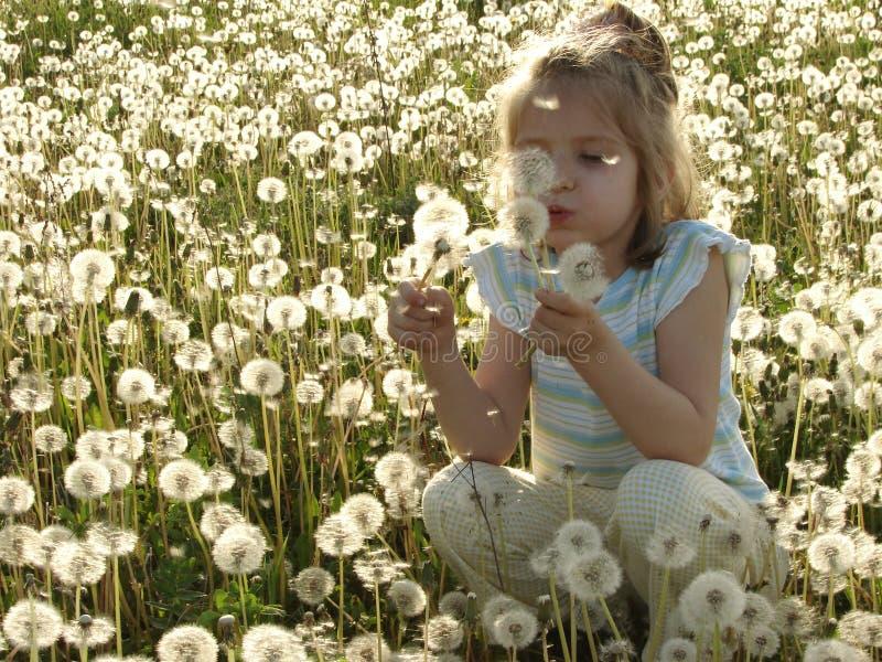 Dandelion meadow. Portrait of the little pretty girl at the dandelion meadow