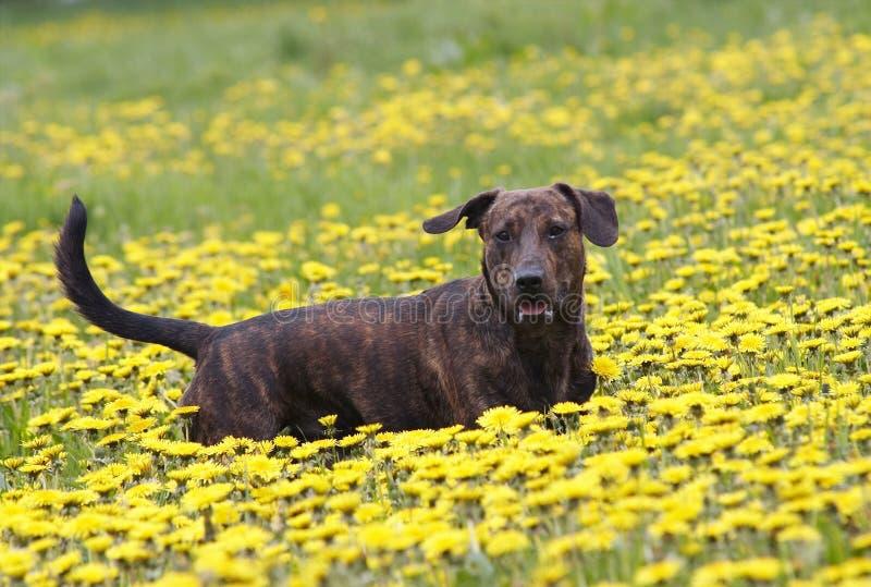 On the dandelion meadow stock photos