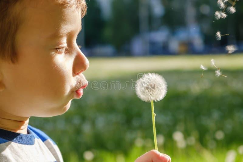 Dandelion natury dziecko trochę śliczny leisure obrazy stock