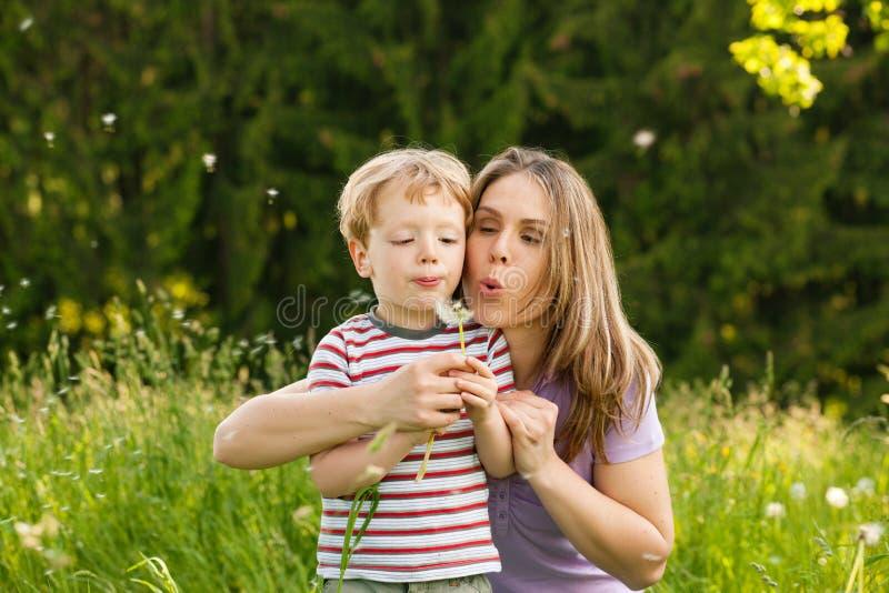 dandelion podmuchowa rodzina sia lato obrazy stock