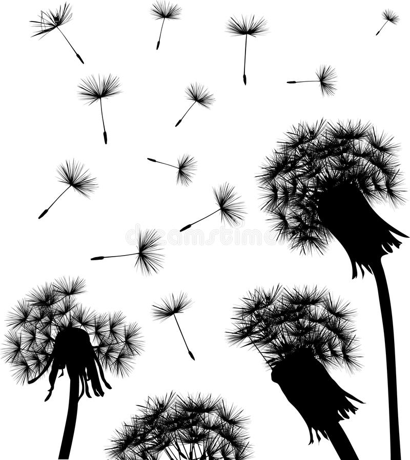 dandelion pola sylwetka ilustracja wektor