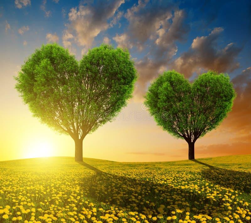 Dandelion pola z drzewami w formie serca przy zmierzchem fotografia stock