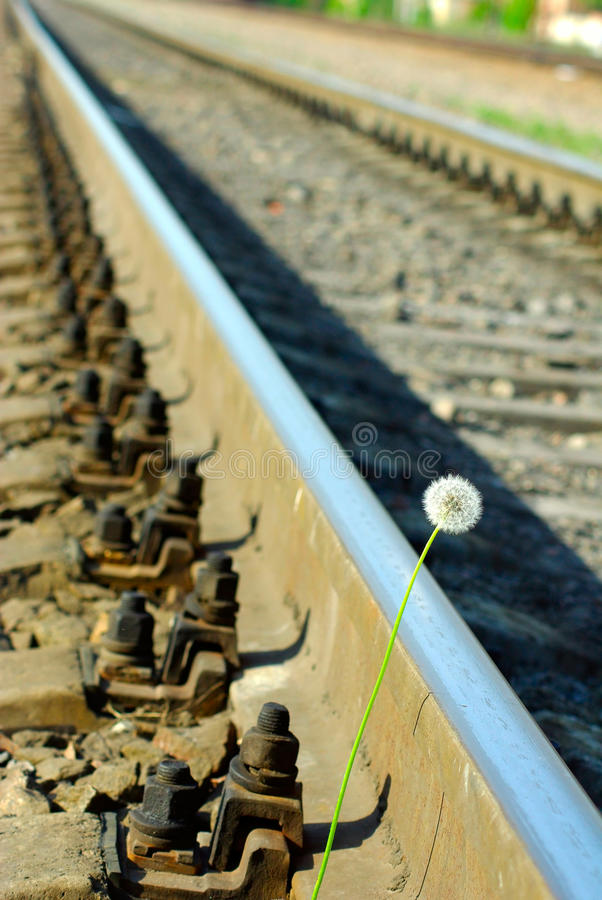 Download Dandelion and rails stock photo. Image of bloom, flora - 26520584