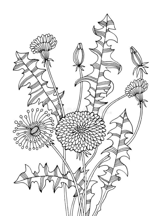 Dandelion rośliny kolorystyki książki wektoru ilustracja ilustracji