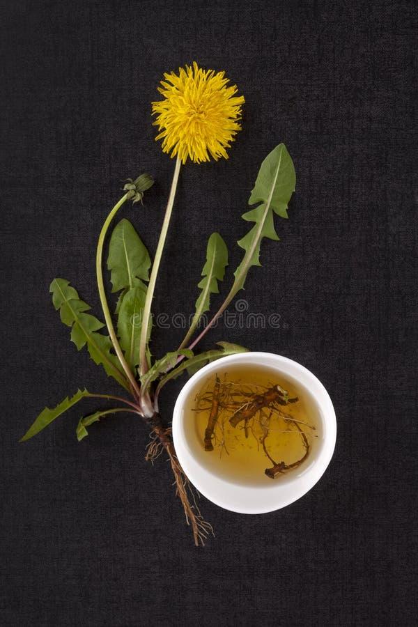 Dandelion root tea. stock photo