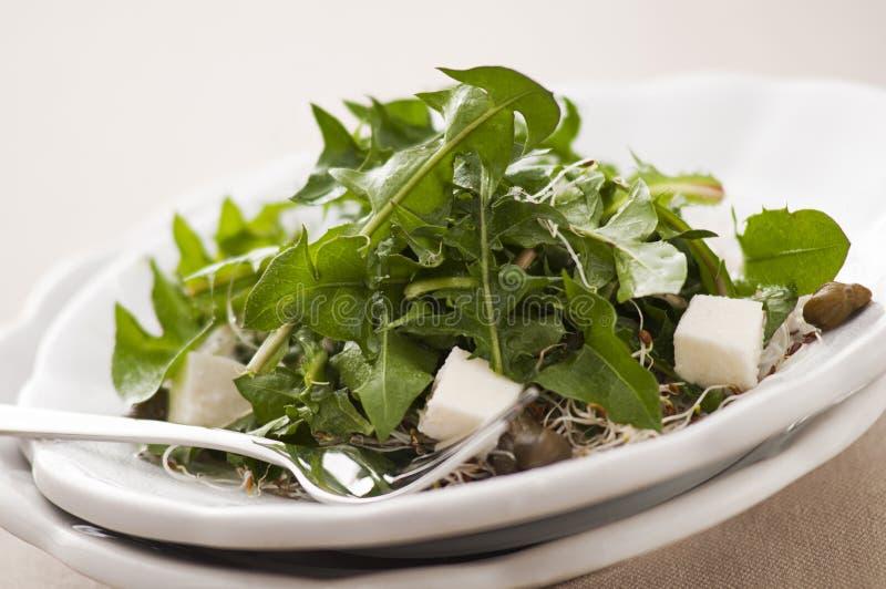 Dandelion salad royalty free stock image