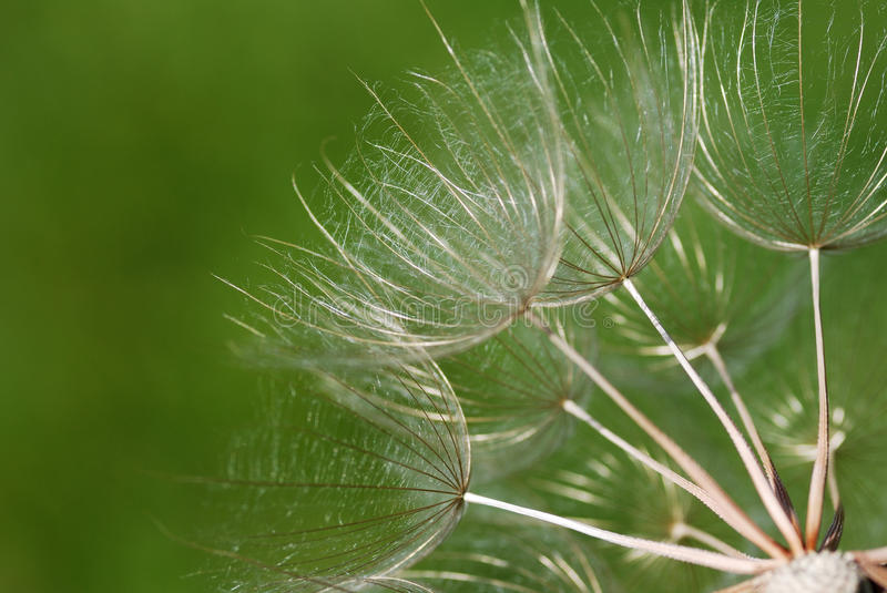 Download Dandelion Seed Head Macro Shot Stock Image - Image: 12913103