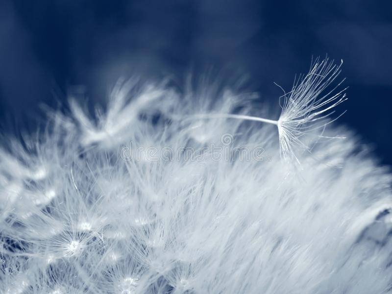 Dandelion seed lies on other seeds royalty free stock photo