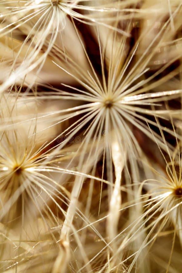 Dandelion seed macro pattern design stock image