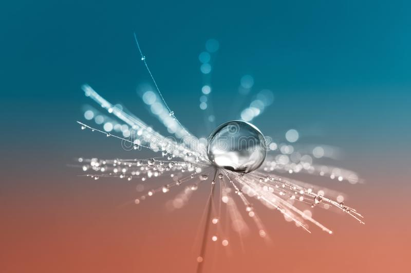 Dandelion seeds with a drop of water on a red aquamarine background.A beautiful artistic image. royalty free stock photo