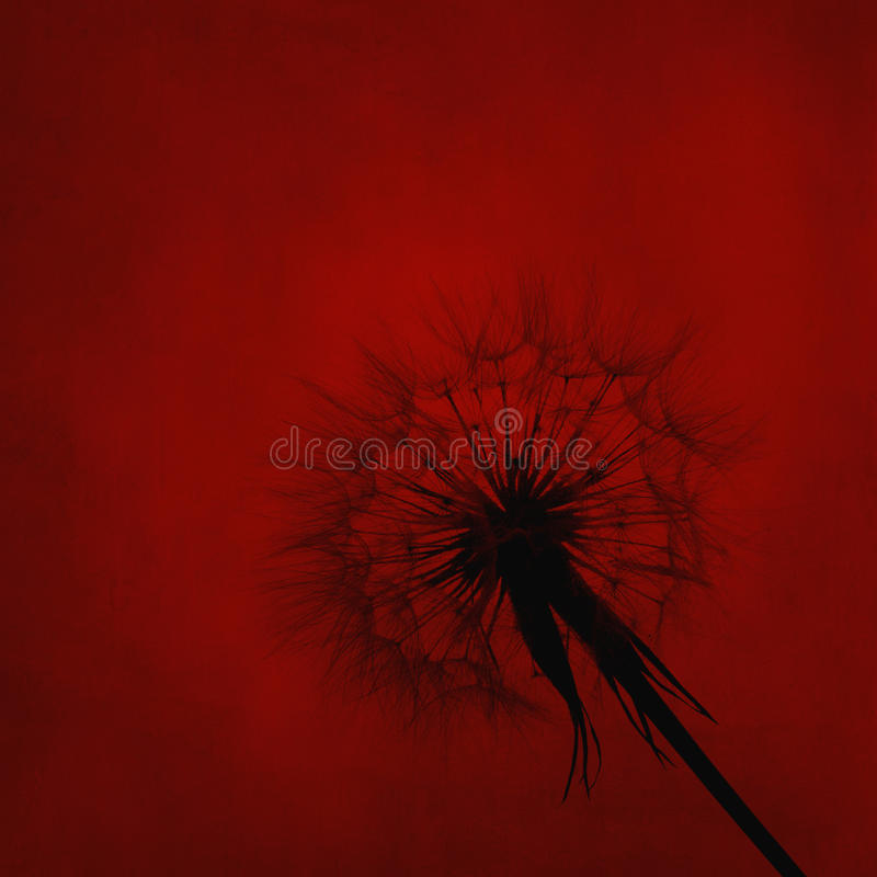 Free Dandelion Silhouette On Red Textured Background Royalty Free Stock Images - 75802589