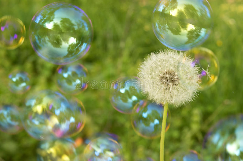Dandelion and soap bubbles royalty free stock photography