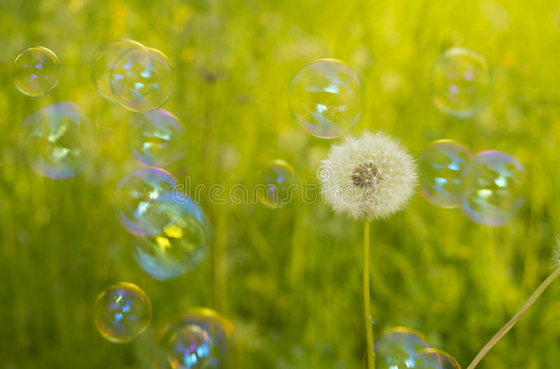Download Dandelion and soap bubbles stock image. Image of aerial - 31835653