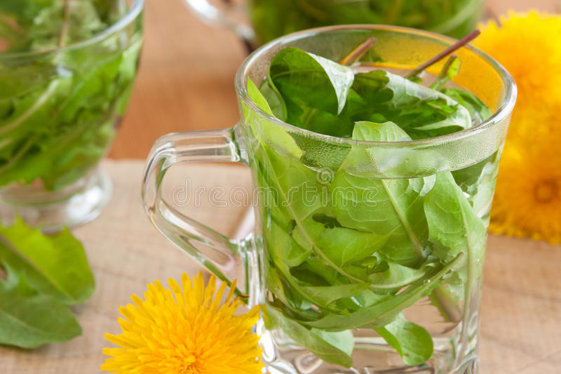 Dandelion tea - hot water poured over fresh dandelion leaves.  stock photography