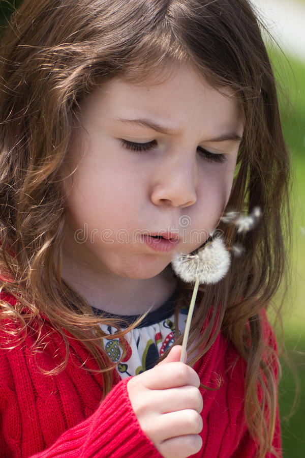 Download Dandelion wish stock image. Image of puff, sweater, blowing - 19932789