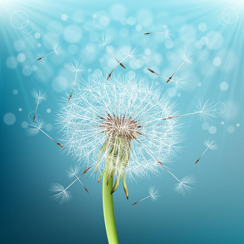 Free Dandelion With Flying Seeds Stock Photo - 125242190