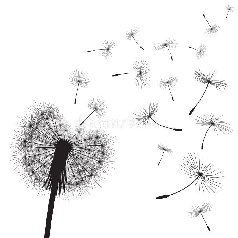 Dandelion ziarna i kwiat obrazy royalty free