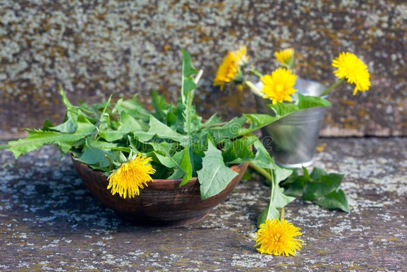 Dandelion zielenie i kwiaty obrazy stock