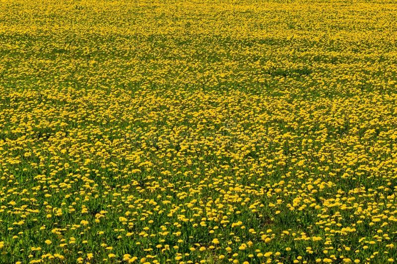 Download Dandelions. stock image. Image of dandelions, texture - 28932309
