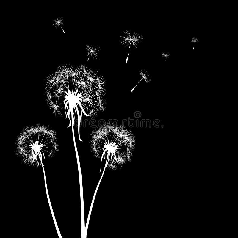 Dandelions stock illustration