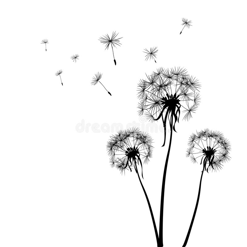 Dandelions vector illustration