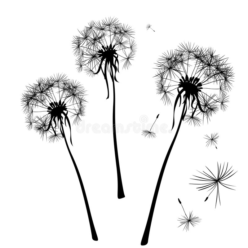 Download Dandelions stock vector. Image of fuzz, beauty, fluffy - 7738352