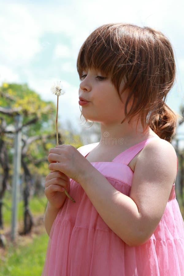 dandelions dziewczyna obraz stock