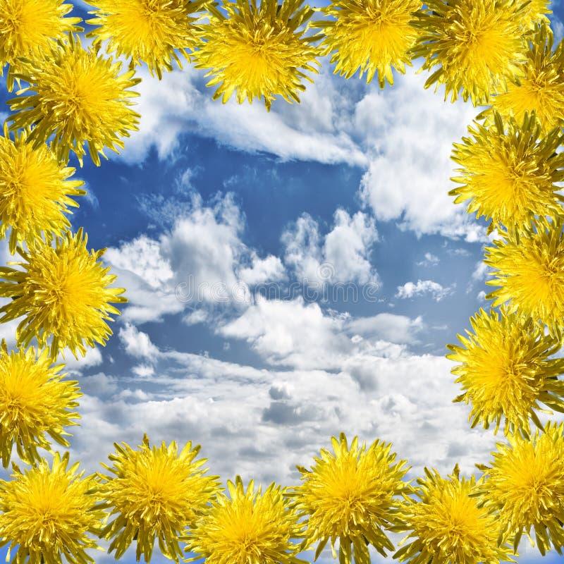 Dandelions frame stock photo