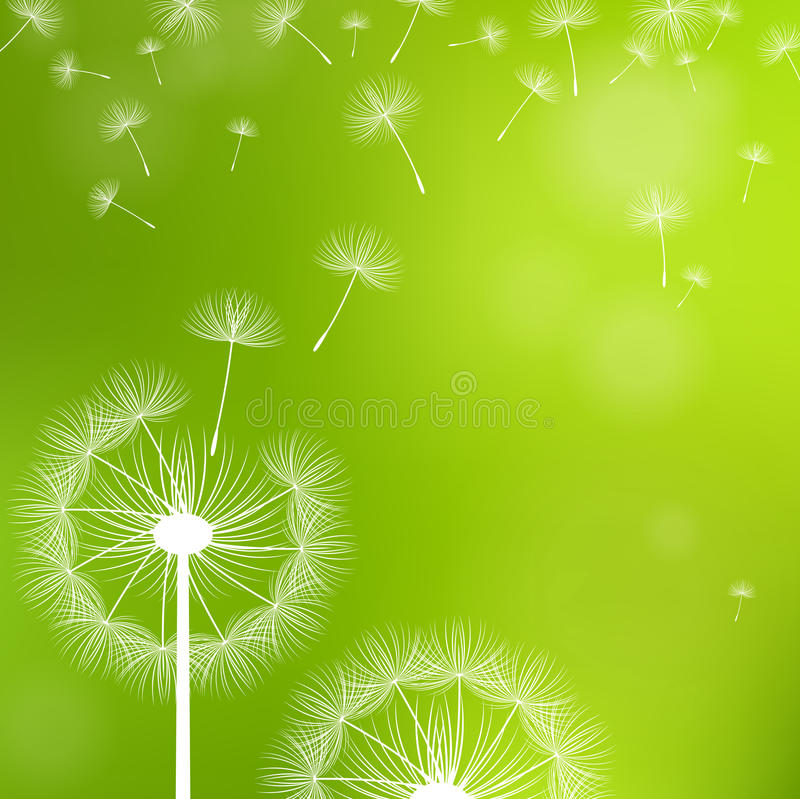 Dandelions on a green background stock illustration
