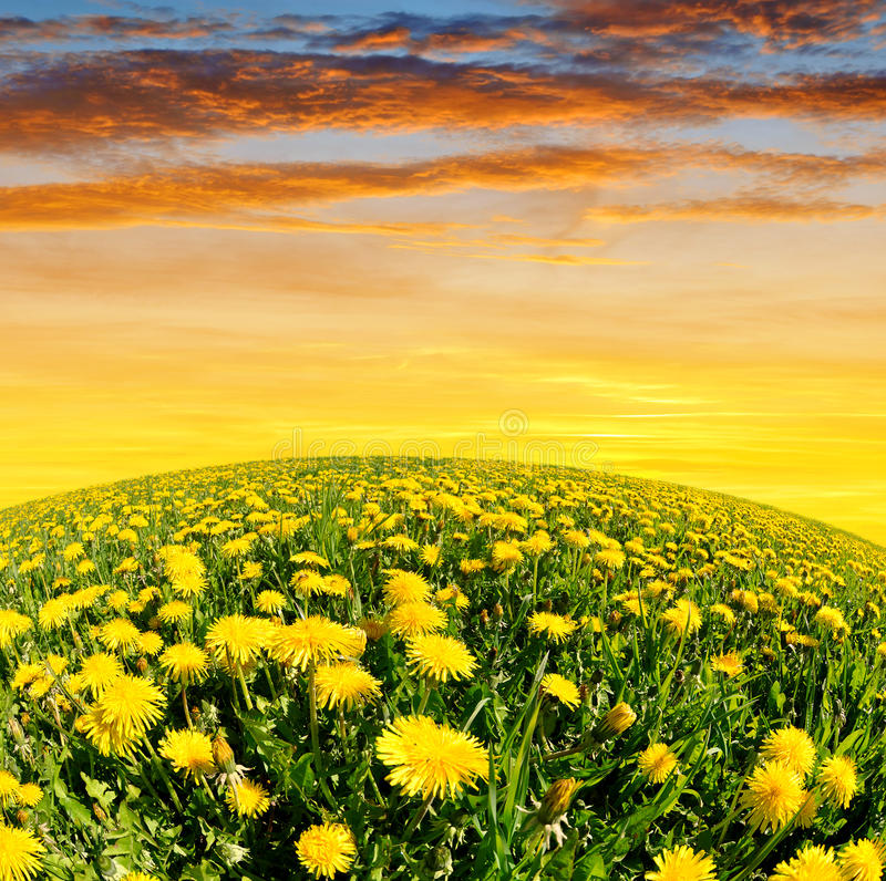 Download Dandelions Stock Photo - Image: 39239878