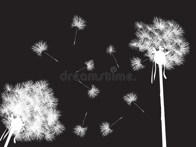 Dandelions in the night royalty free illustration