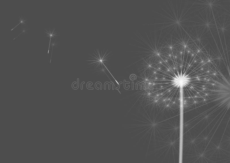 dandelions szarzy