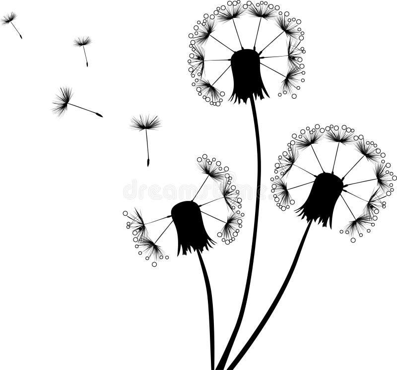 Dandelions w kroplach i latających ziarnach royalty ilustracja