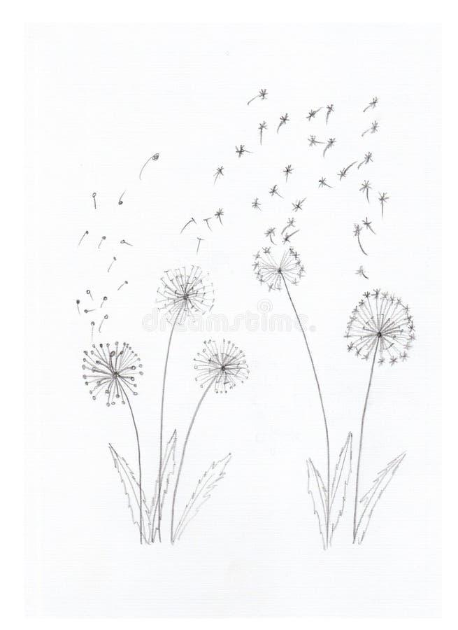Dandelions w ołówku zdjęcie stock