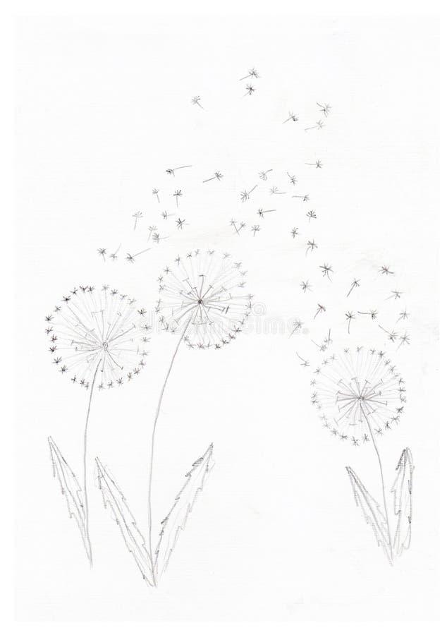 Dandelions w ołówku zdjęcie royalty free