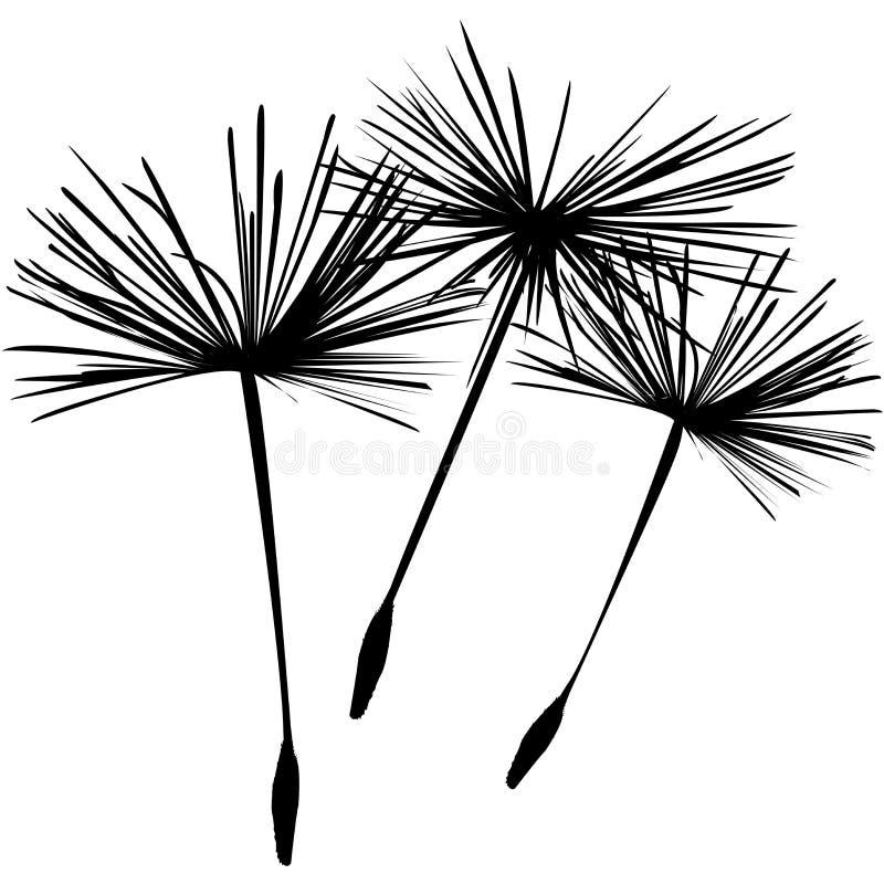Dandellion fluffs Hintergrund lizenzfreies stockbild