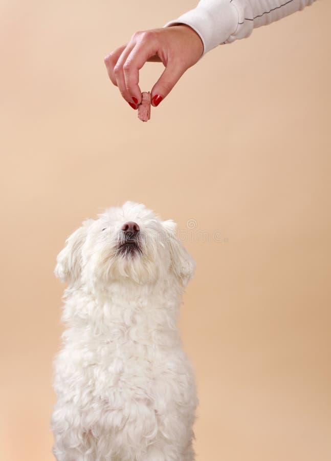 Dando ossequio al cane fotografia stock