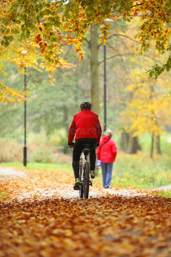 Dando um ciclo fora o homem na bicicleta, outono dourado no parque foto de stock royalty free
